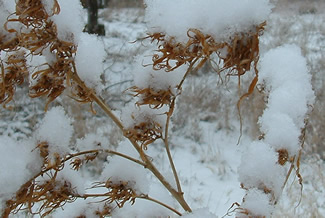 Close up of snow on plants